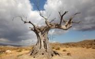 Come sapere se un albero è morto
