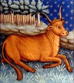 Come comprendere un uomo del segno del toro