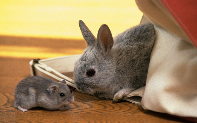 Animals Beasts Rabbit and hamster 026978