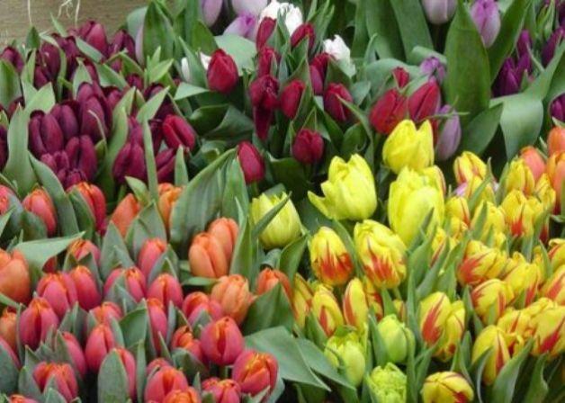 Quando piantare i bulbi in fiore