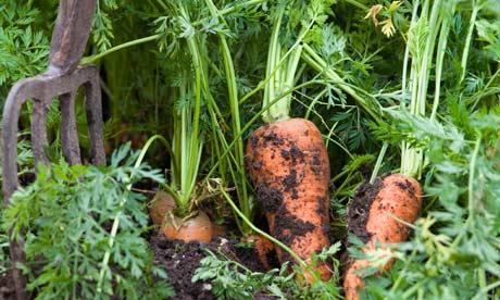 Cosa si pianta a giugno nell 39 orto for Cosa piantare nell orto adesso