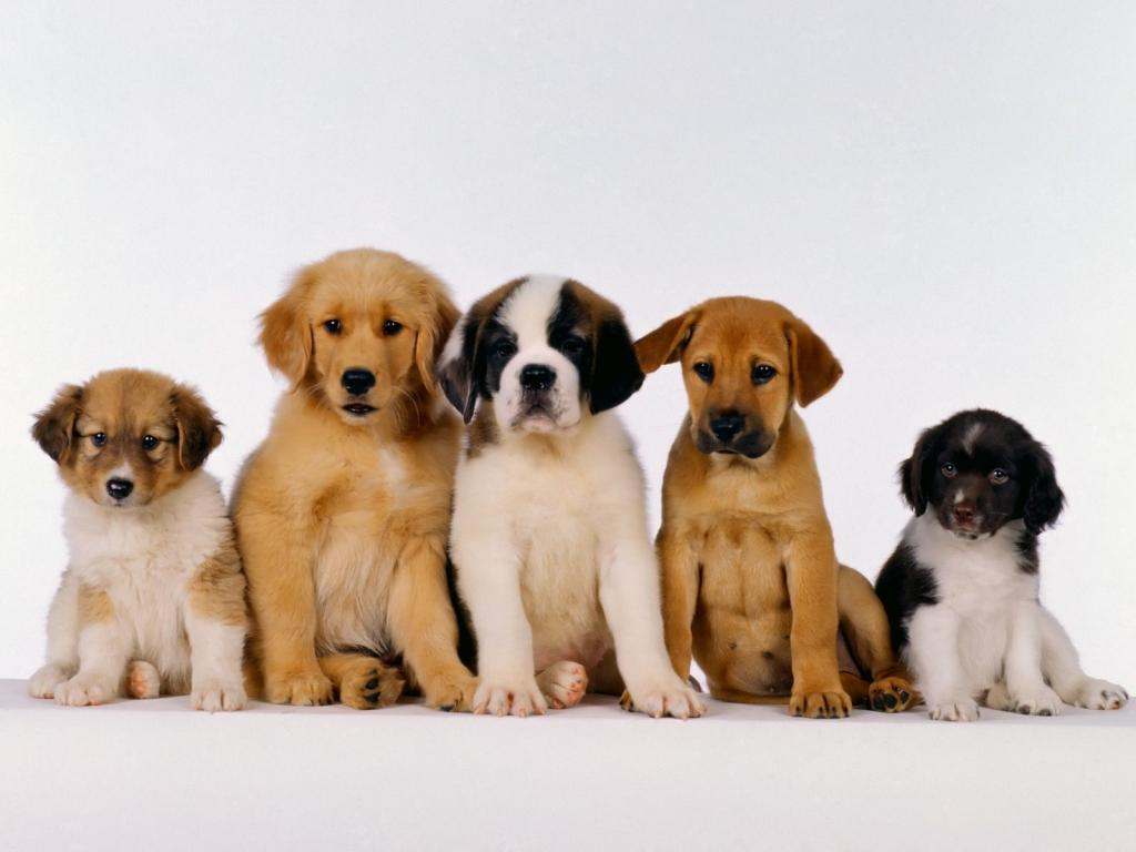 I cani sono gelosi del padrone?