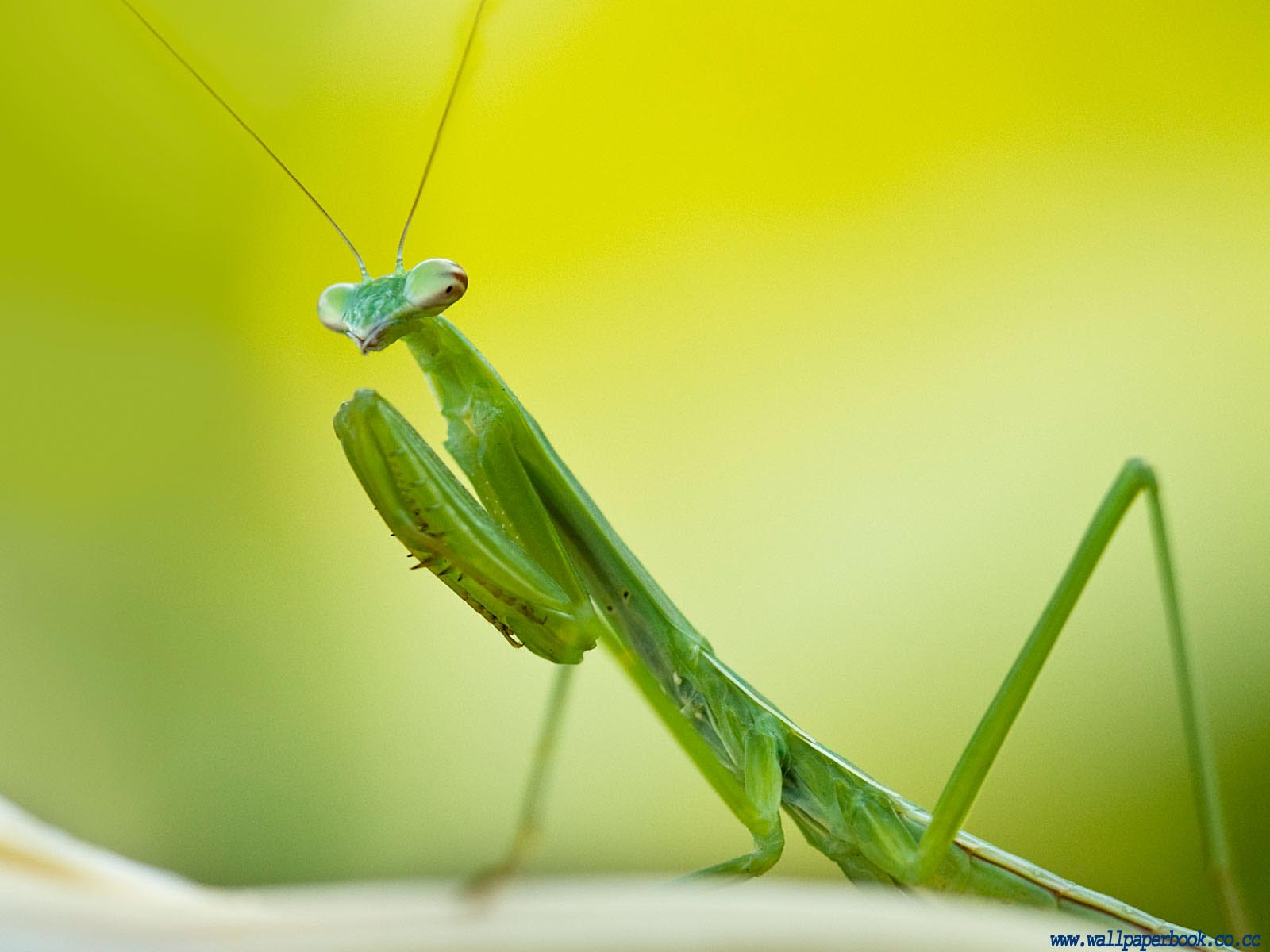 Insect Wallpaper 7 copy1