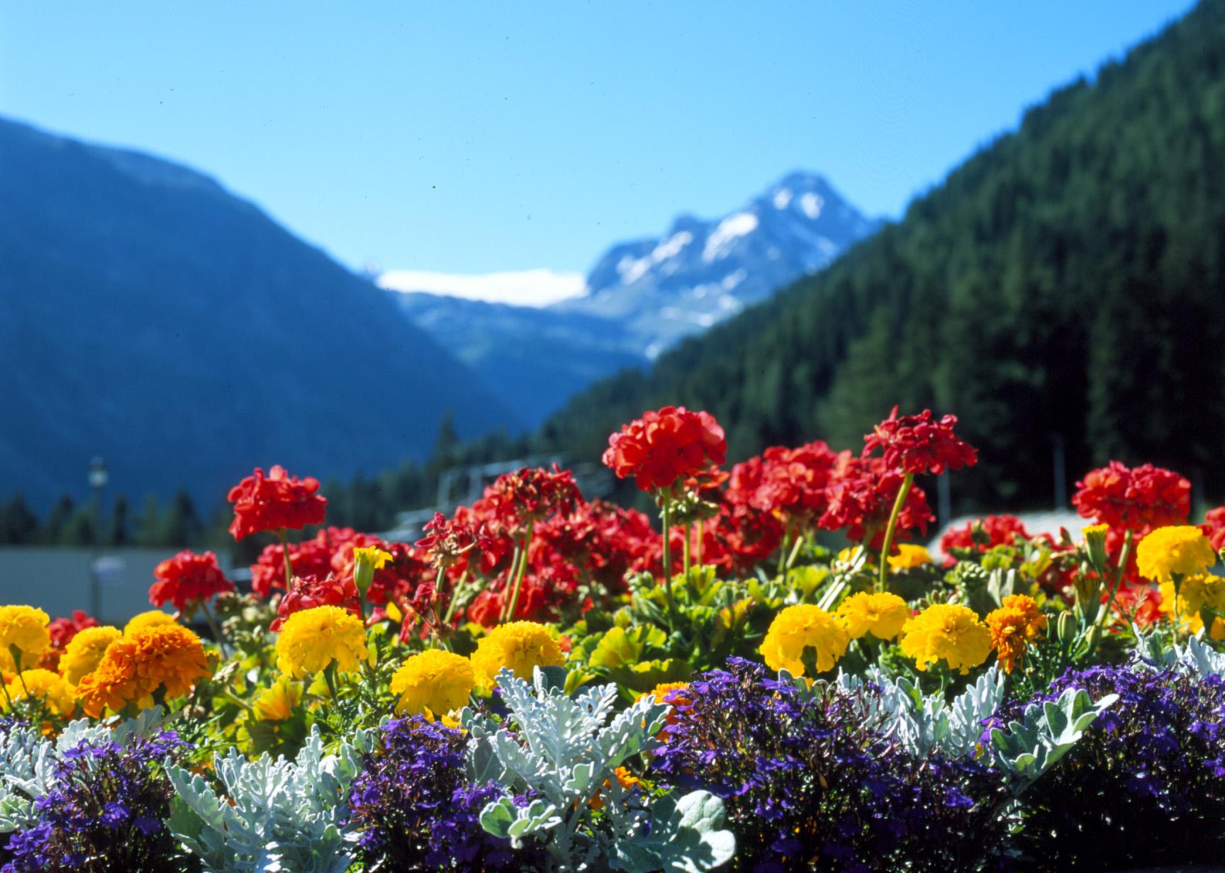 Poesia: fiori