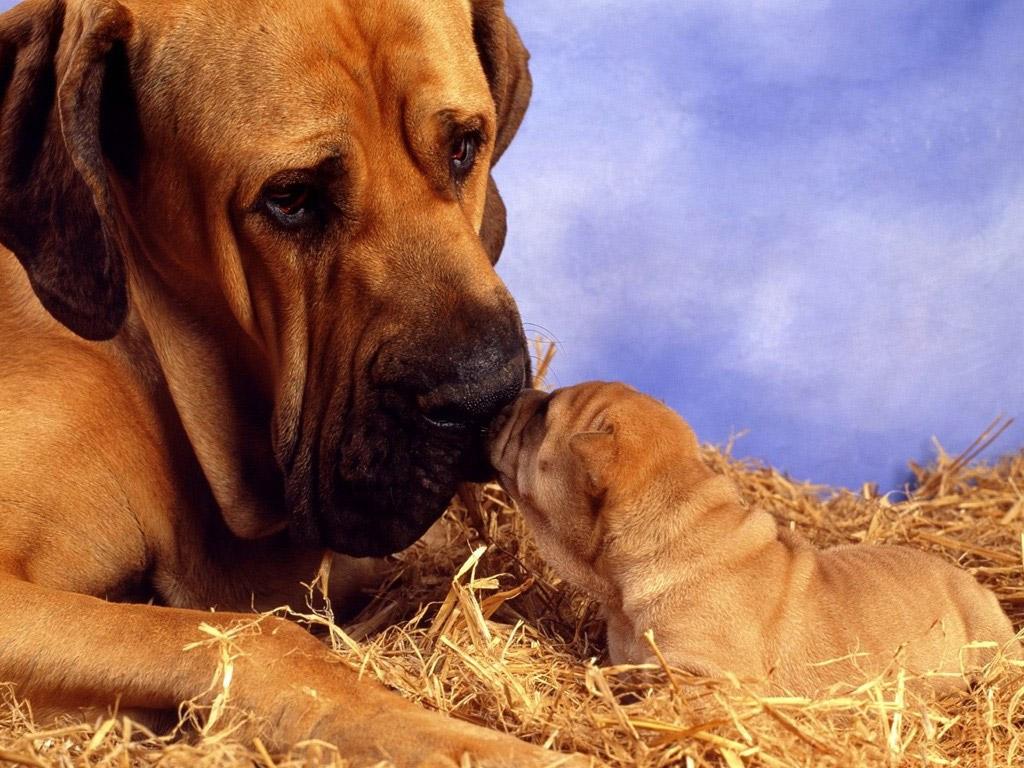 Come far accettare al nostro cane la presenza di un nuovo cucciolo?