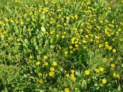 Come riconoscere le erbe selvatiche?