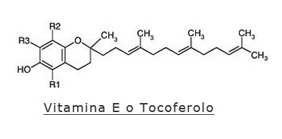 A cosa serve la vitamina E