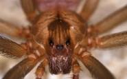 Erezioni, sudore e paura: alcune delle cose strane e orribili causate dal morso di un ragno.