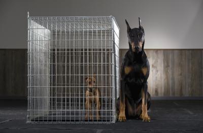 Segreti per l'adozione di un cane