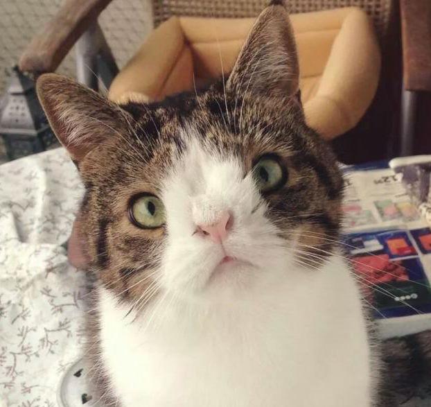 Il gatto con la sindrome di down che ha conquistato il web