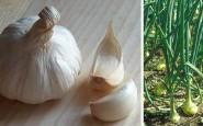 I benefici dell'aglio cotto per la salute