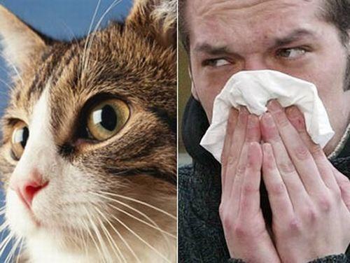 Sintomi dell'allergia ai peli degli animali