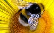 Piante e fiori contro api e vespe