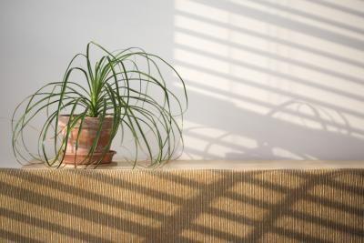 Come liberarsi dei moscerini presenti sulle piante da interno con l'aceto