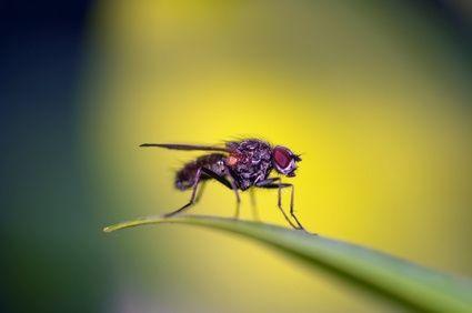 Come liberarsi dei moscerini sulle piante da interno