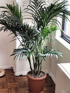 Come tenere i moscerini lontani dalle piante da interno in 4 semplici modi
