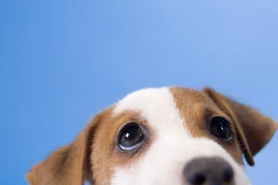 Educare il cane a non saltare addosso