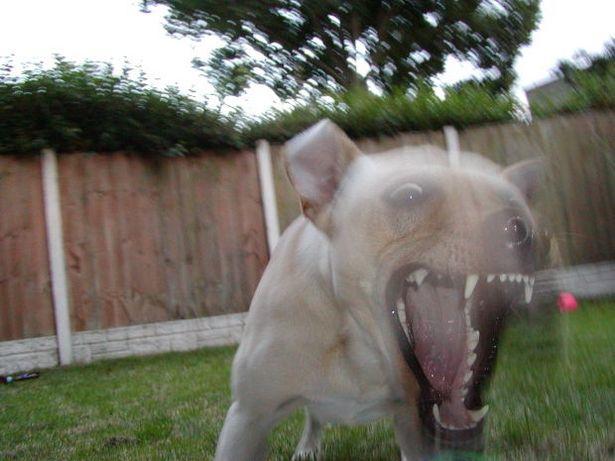 Cosa fare se il cane diventa aggressivo