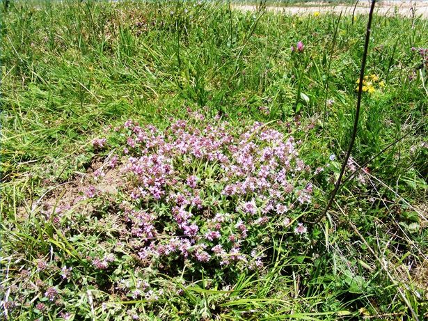 respira meglio con l'aiuto delle erbe