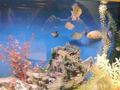Come trasferire i pesci da un acquario a un altro