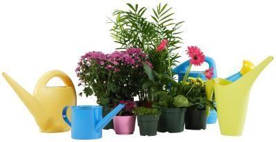 Rimedi casalinghi per uccidere i moscerini presenti sulle piante da interno