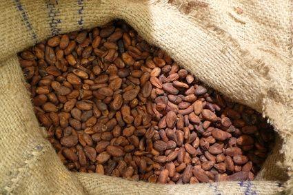 Come far fermentare i semi di cacao