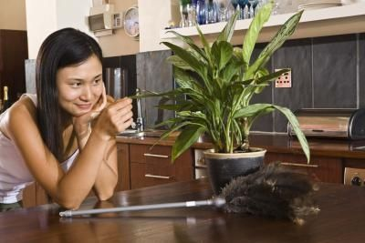 Come liberarsi dei moscerini neri presenti sulle piante da appartamento