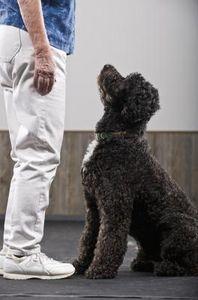 Consigli per addestrare il cane