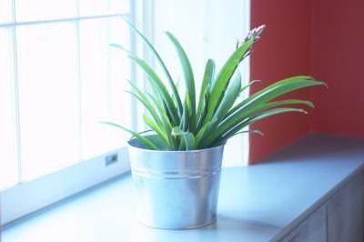 Come mettere fine ai moscerini sulle piante da interno