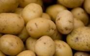 Come sapere se le patate sono andate a male