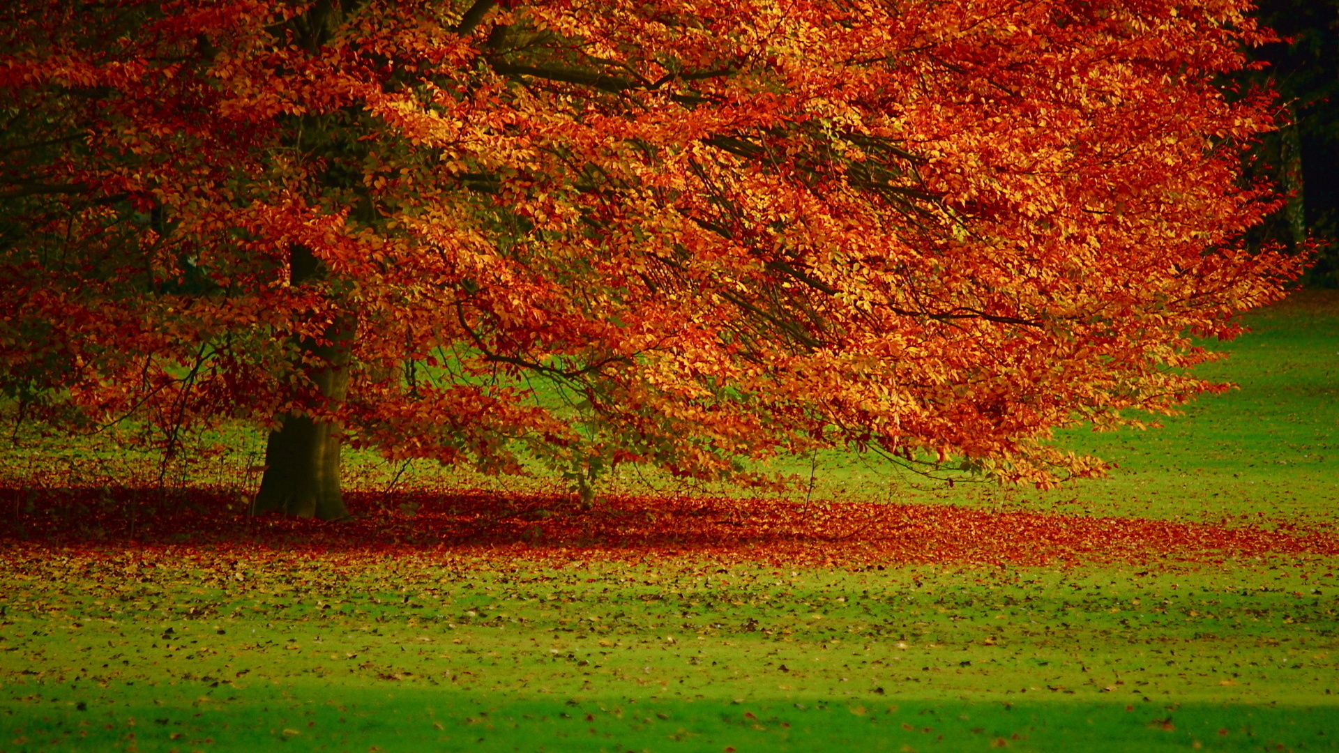 Come dimagrire in autunno