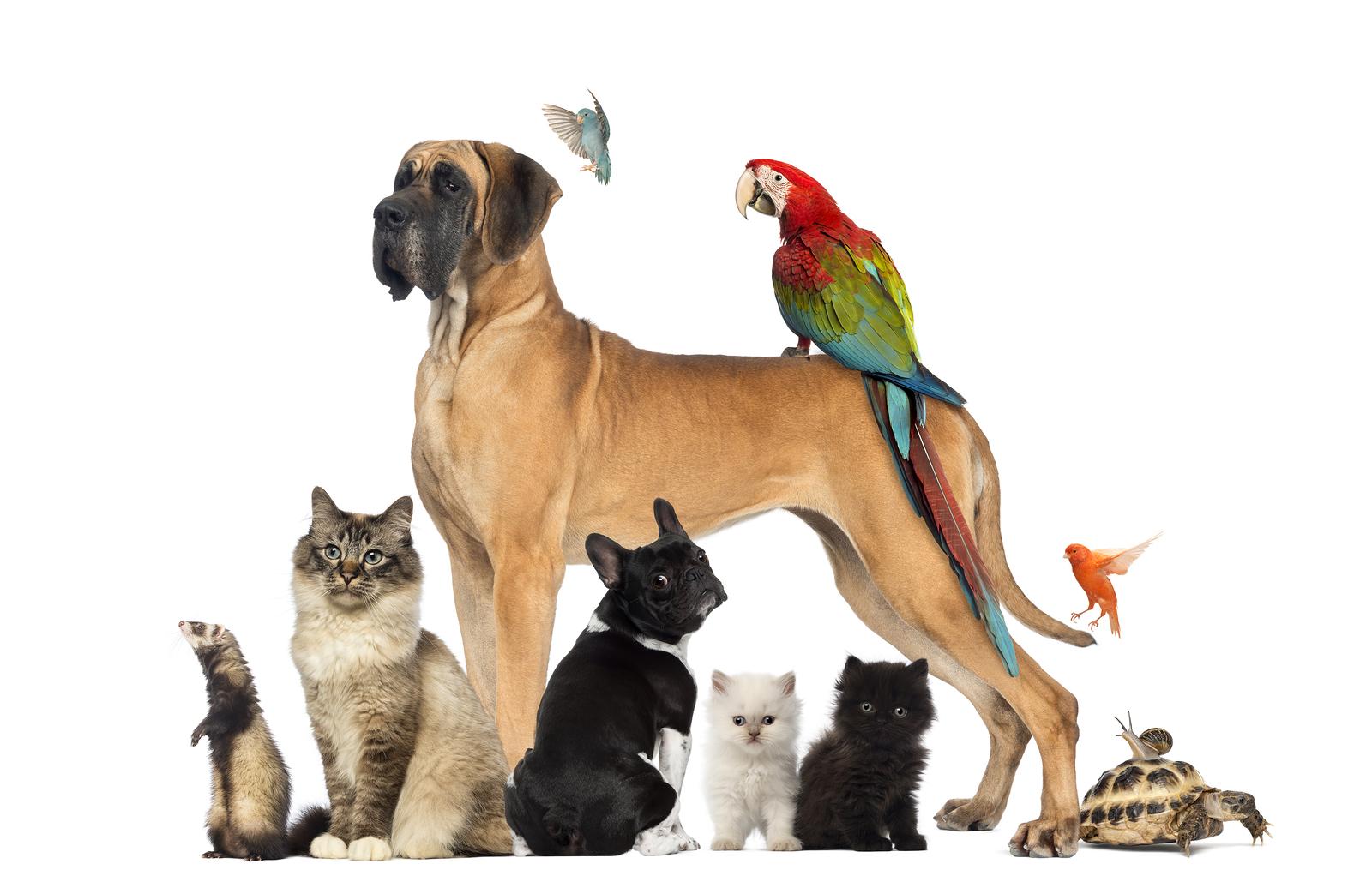 Sapere scegliere l'animale domestico