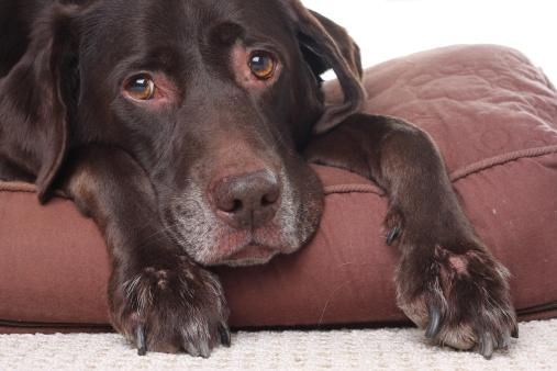 Quali sono sintomi disidratazione cane