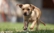 Tumore cerebrale nei cani: come riconoscere i primi sintomi