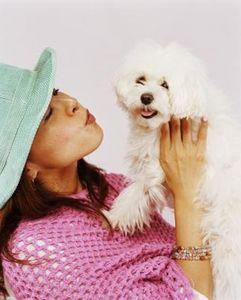 Lista dei cani ipoallergenici come il maltese