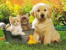 Cani e gatti: siti per i loro padroni