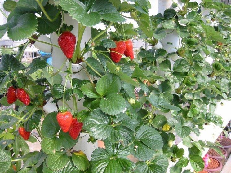 Coltivazione Idroponica, come coltivare in casa senza terra