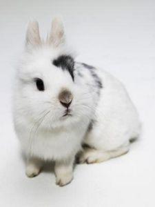 Come prendersi cura di un coniglio appena nato