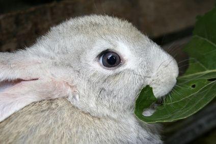Come impedire ai conigli di rosicchiare i cavi elettrici