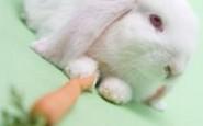 Come curare un coniglio col raffreddore