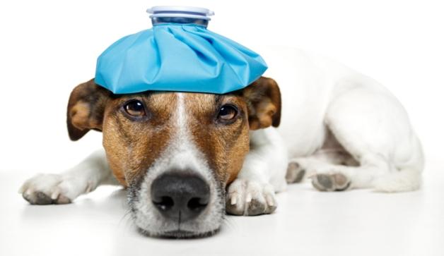Quali sono sintomi colpo di calore cane