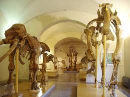 Come lavorare nei musei?