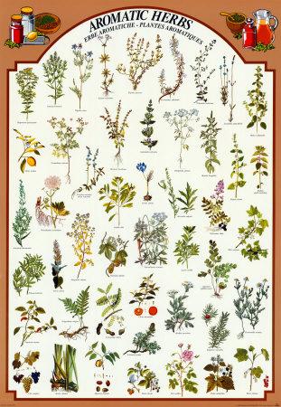 Guida: Erbe e spezie da usare col pomodoro