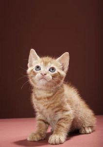 Perché i gatti mettono le zampe nella ciotola dell'acqua?