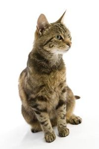 Gli effetti dei repellenti per uccelli ad ultrasuoni sui gatti