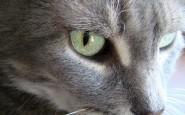 Perché i gatti si strappano i peli a ciocche?