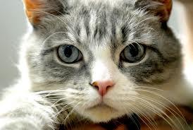 Cosa sta provocando il tuo gatto a fare quell'orribile rumore?