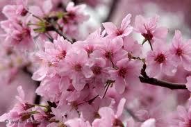 Dov'è la primavera