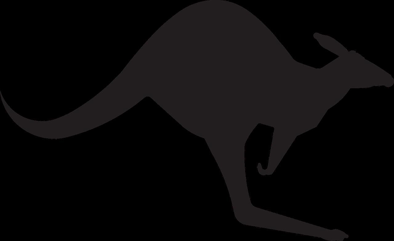 kangaroo 306483 1280