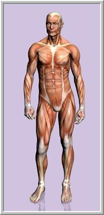 Come imparare il corpo umano